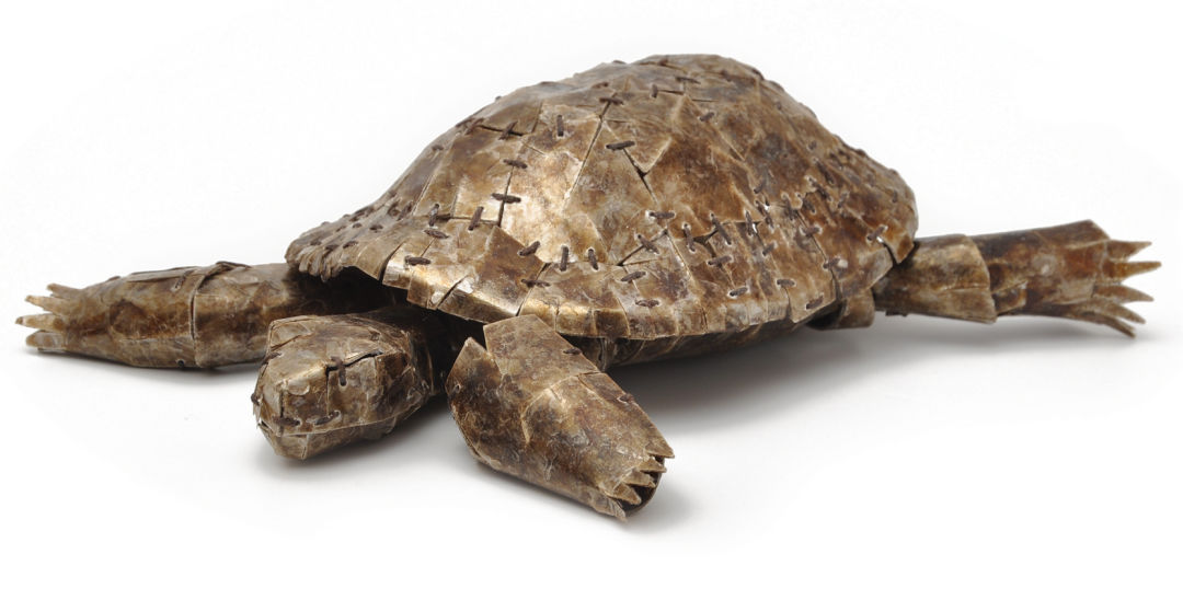Calde untiled tortoise m7hohy