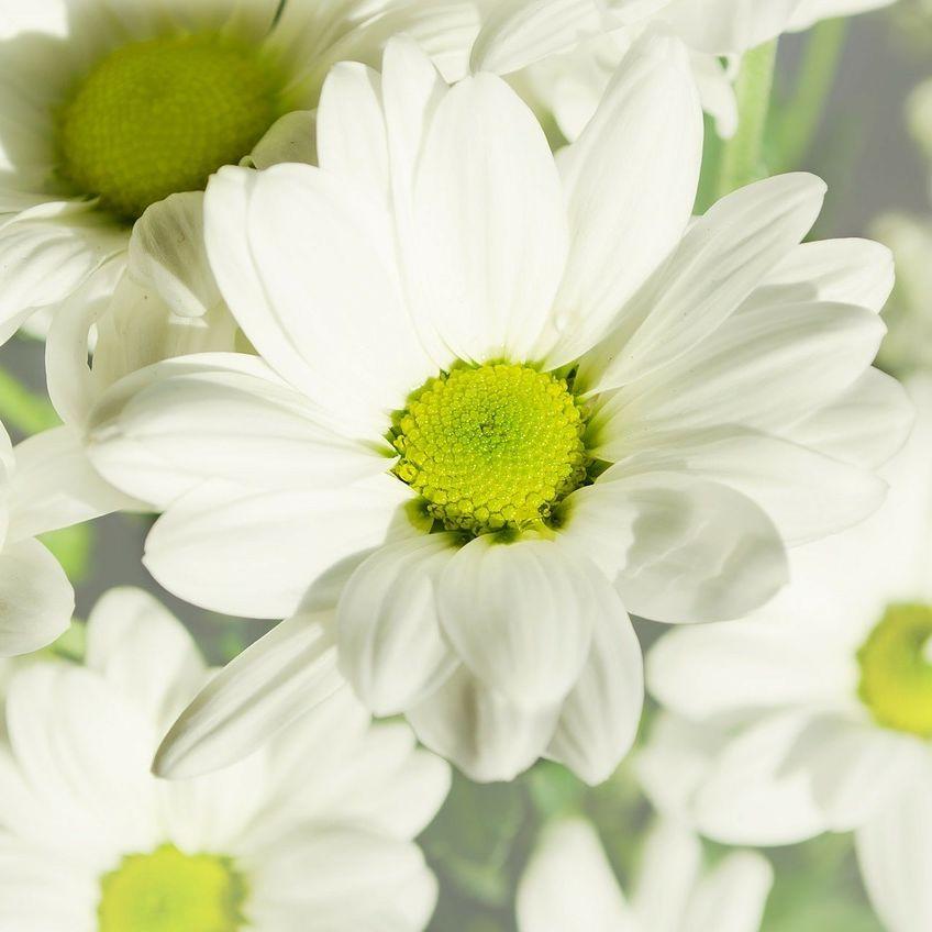 Flowers dp1x3c