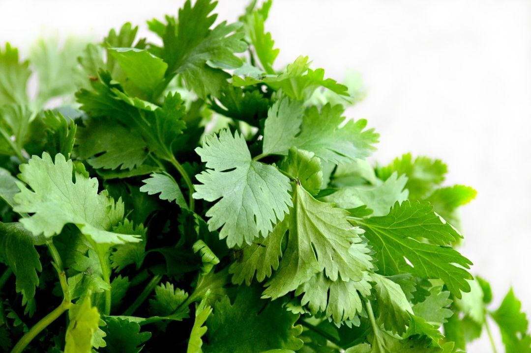 Parsley photo 4 from pixabay gr4mbx