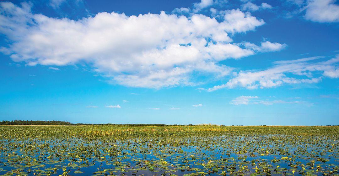 Everglades owwipx