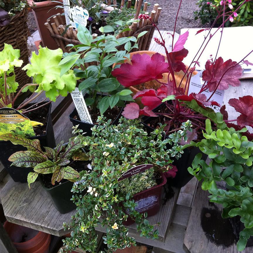 Winter window box plants en8rqe
