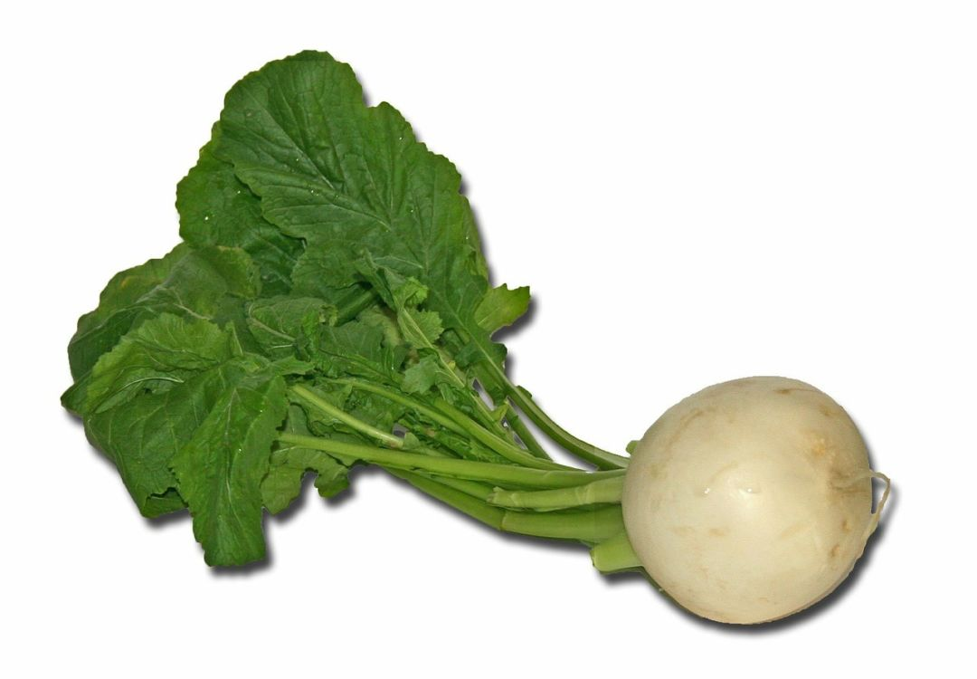 Turnips photo 4 from pixabay h3f0nm