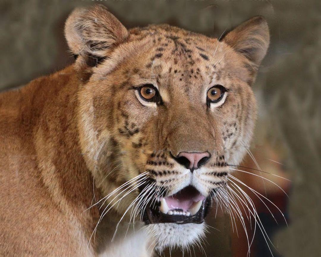 Miathe liger fmhqko