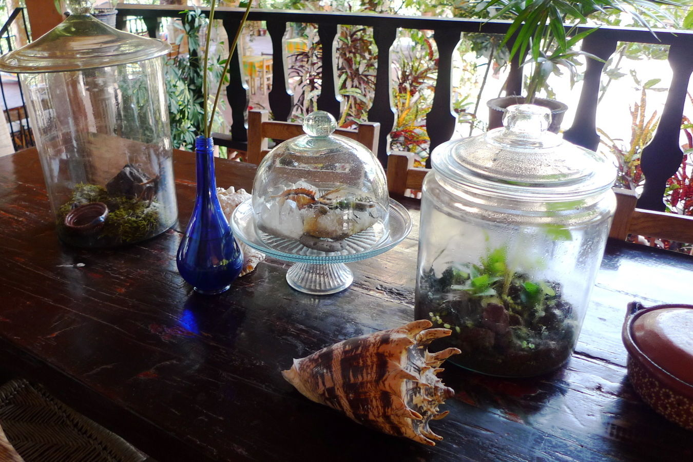 Terrariums on counter icloh3