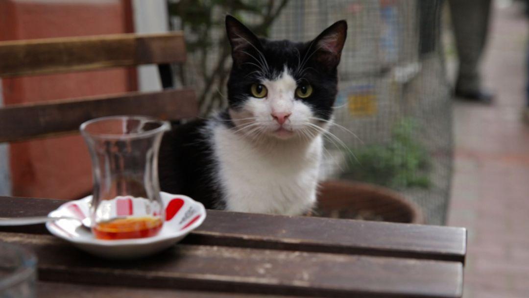 Kedi okfisc