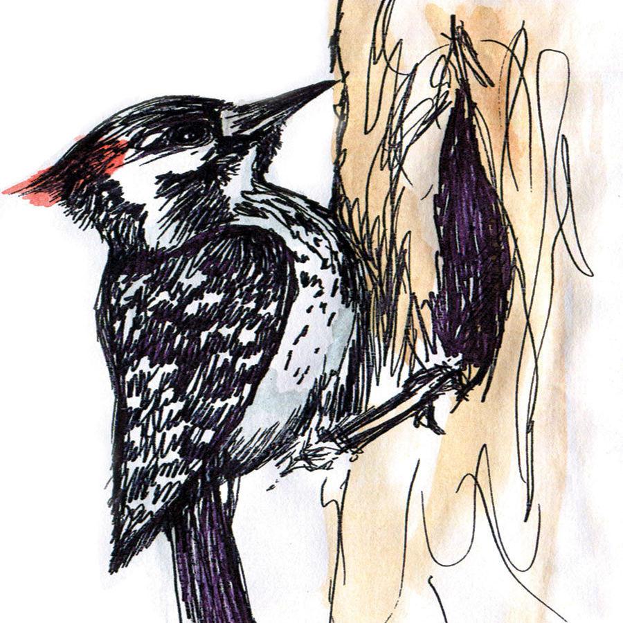 Woodpecker osytfl