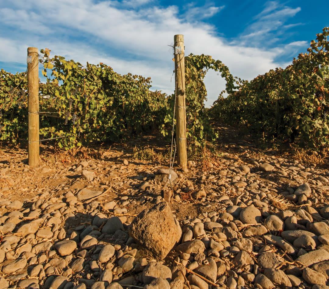 Walla walla rocky wine g6gylv xbzpv4