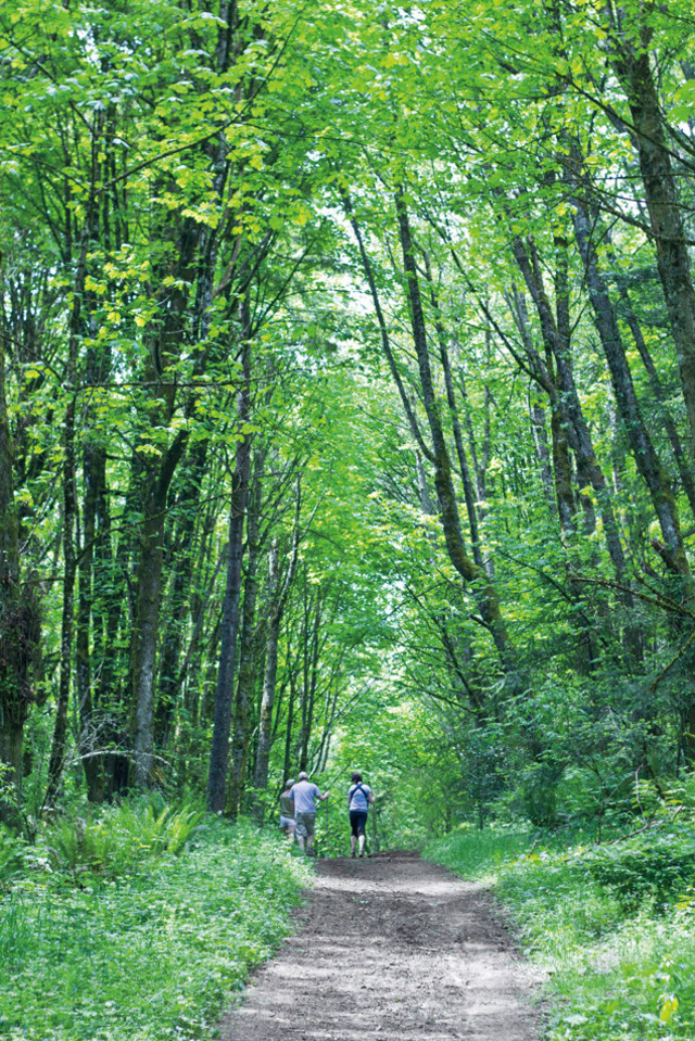 Forest Park Guide The Best Hikes Portland Monthly
