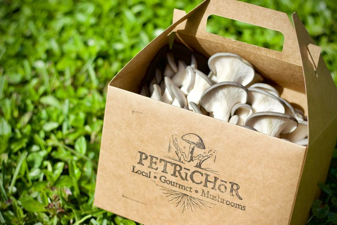 Petrichor Mushrooms was founded by friends and urban farmers Michael Shea and Howard Schmidt.