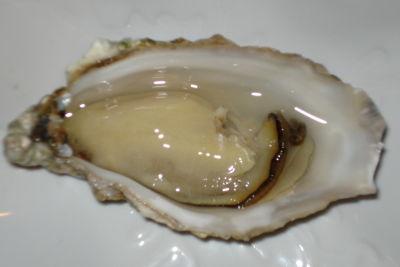 Openedoyster fxtziv