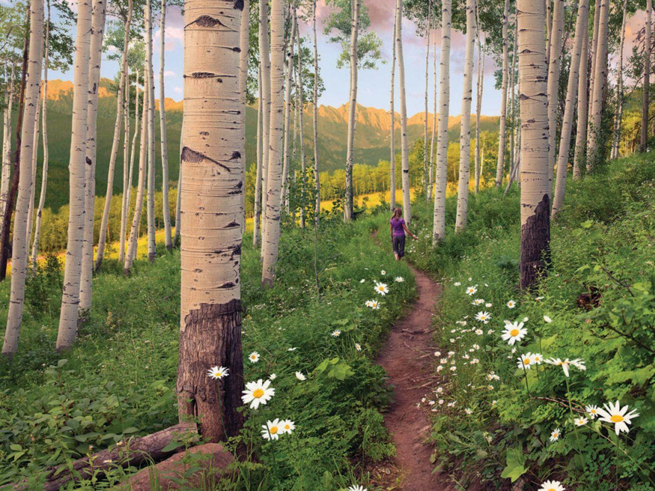 Berry picker trail vail coloradoaffleck cdhb1m