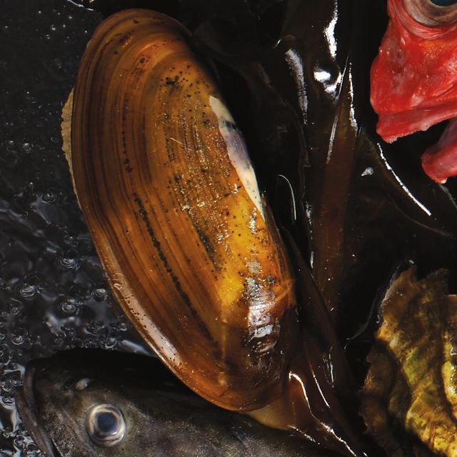Razor clam hkdinc
