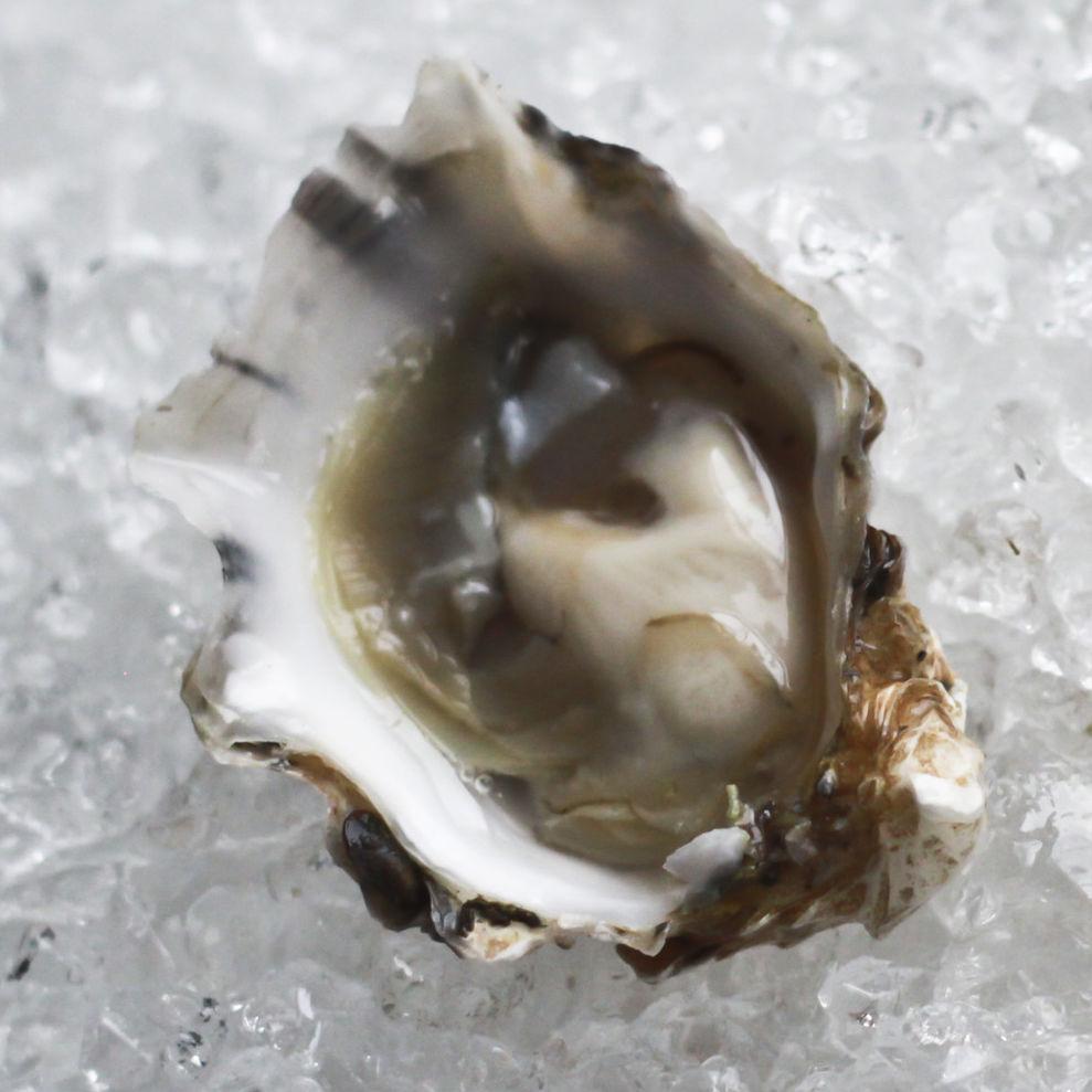 1112 oysters portland parish 4 wufqga