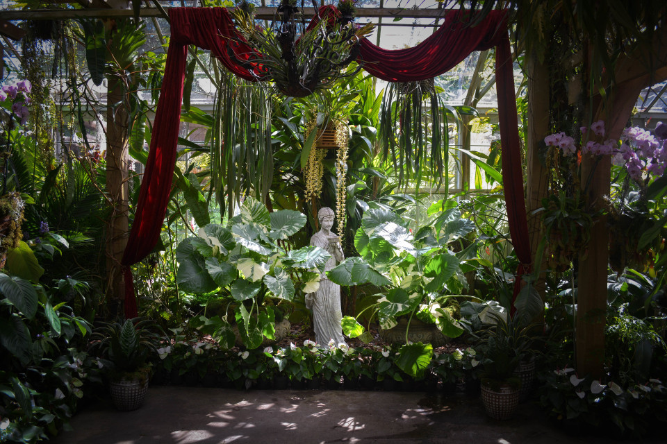 Orchid Lover Alert: Selby Gardens Opens Its New Conservatory Show ...