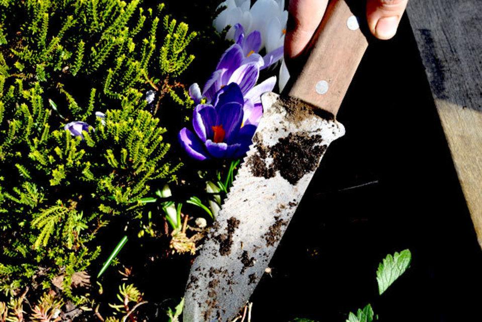 Slide Show: 21 Expert Tips For Seattle Gardeners