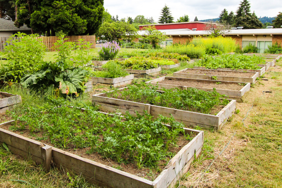 22b095b7 Slide Show: Schoolyard Farms' Sustainable Urban Farm Model ...