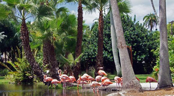 Flamingosnice600 sm kvrmzs