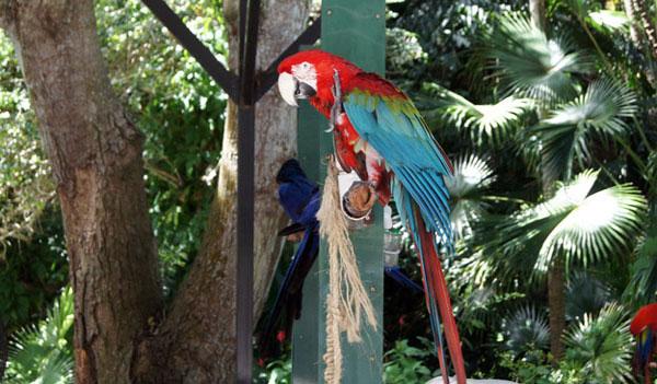 Junglegardenbird600 sm1 p0h2hi
