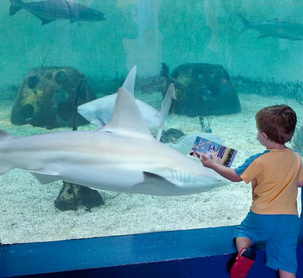 Large shark exhibit mvke2z