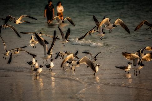 Birds in flight kbb1yj
