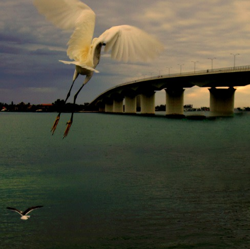 Birds ringling bridgeres fomdu3