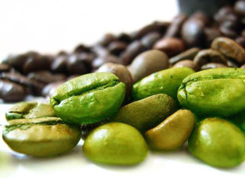 Extract of green coffee beans pcm9aq