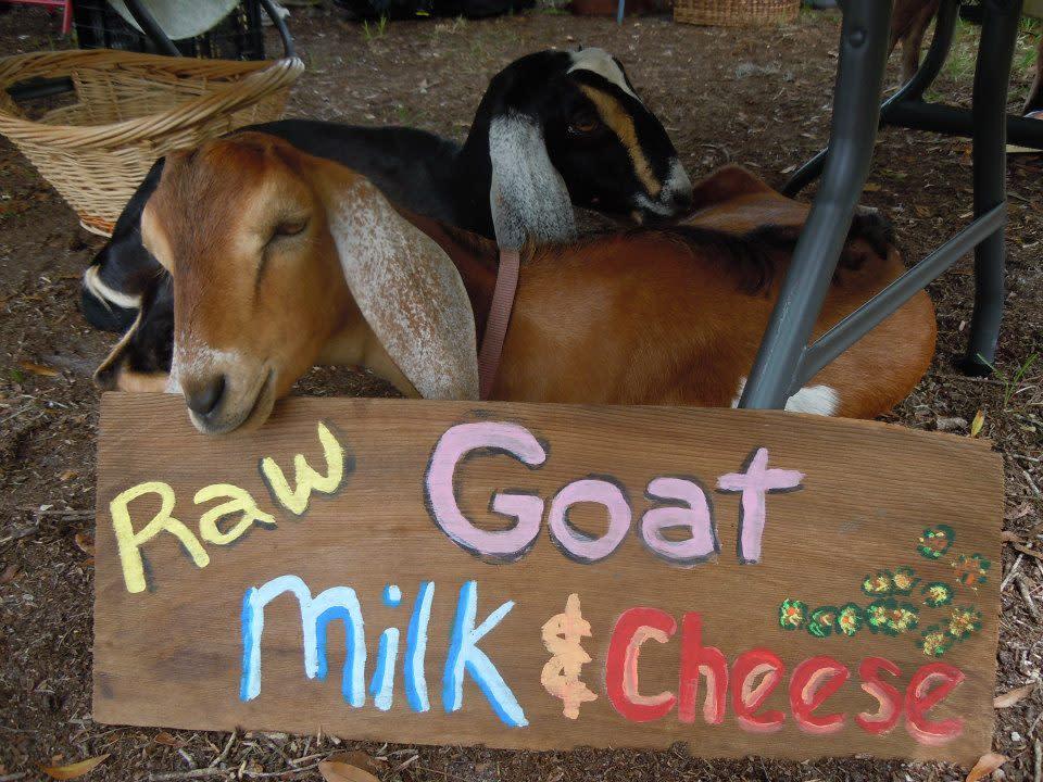 Goats nzkubm