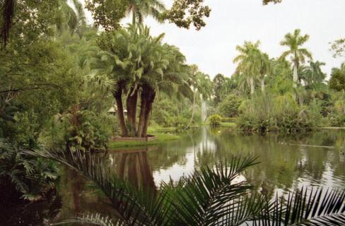 Sarasota jungle gardens hoboxl