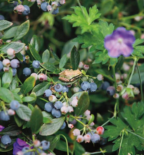 The Quintessential Portland Gardener