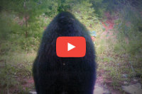 Bigfoot: Alive & Well and Living in Texas