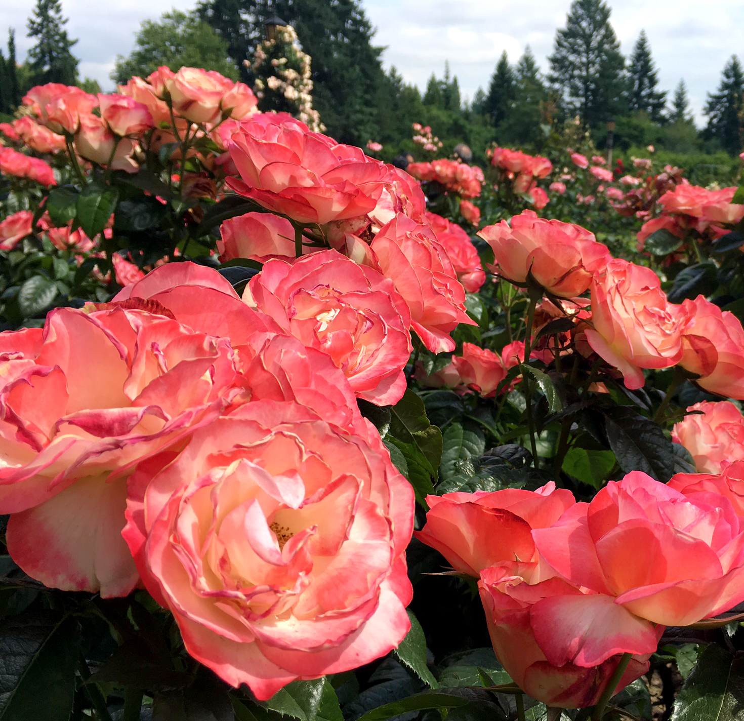 Your 2018 Guide To 10 Portland Area Flowers Portland Monthly