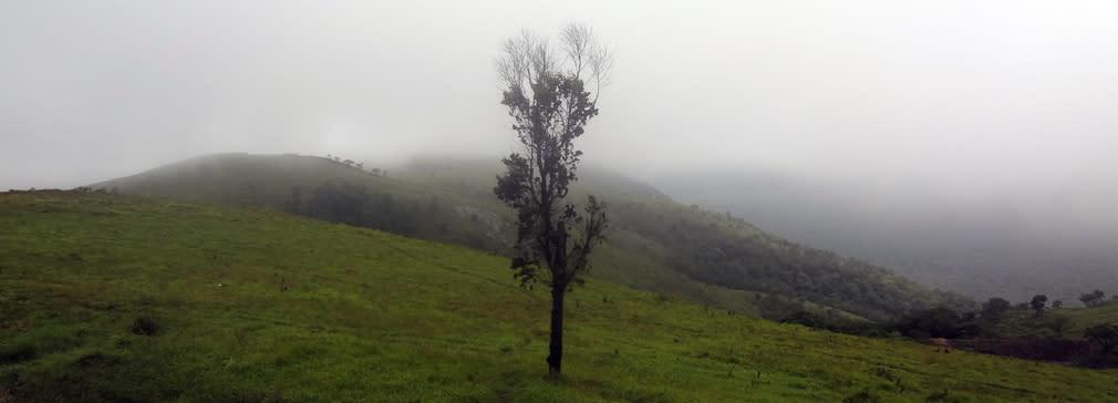 Gopalaswamy_Hills_Meadow_2