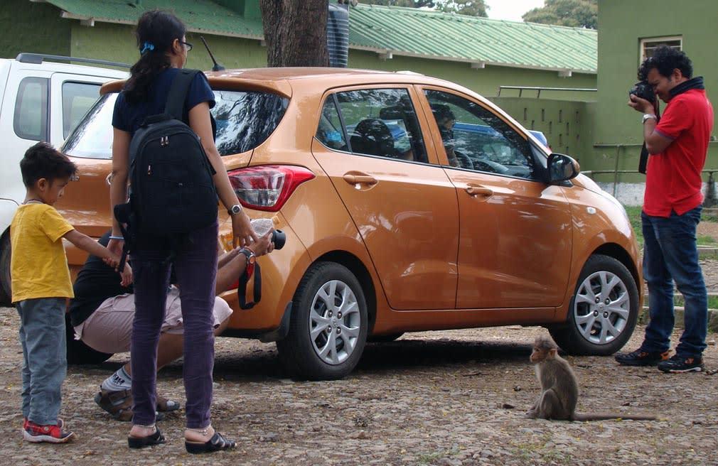 Bandipur_Park_Area_Monkeys
