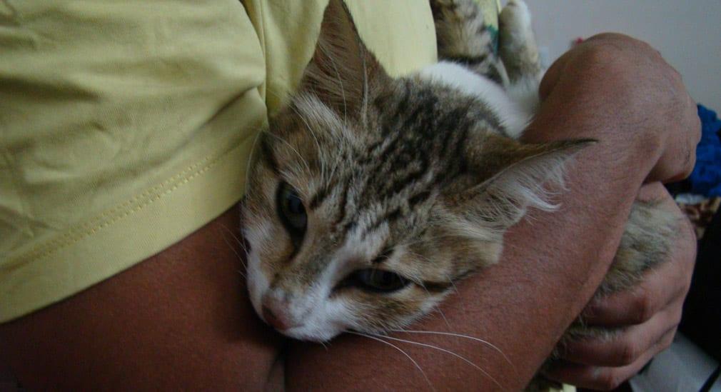 Anand_Resorts_Cat