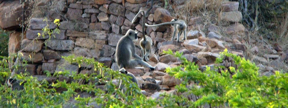 Other_Monkeys