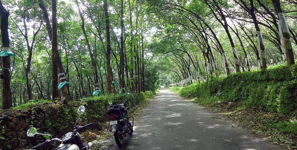 Rubber_tree_Plantations_Mookannoor