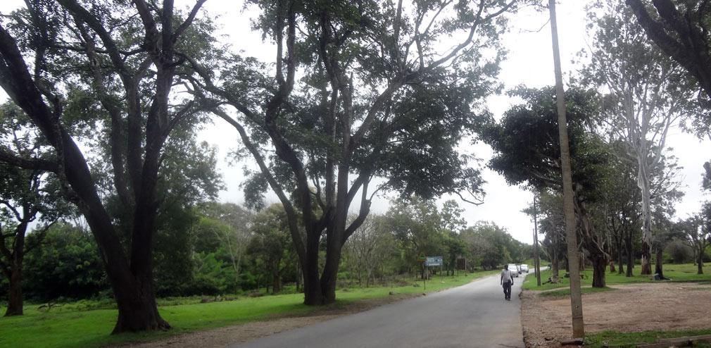 Bandipur_Tiger_Reserve_Roads