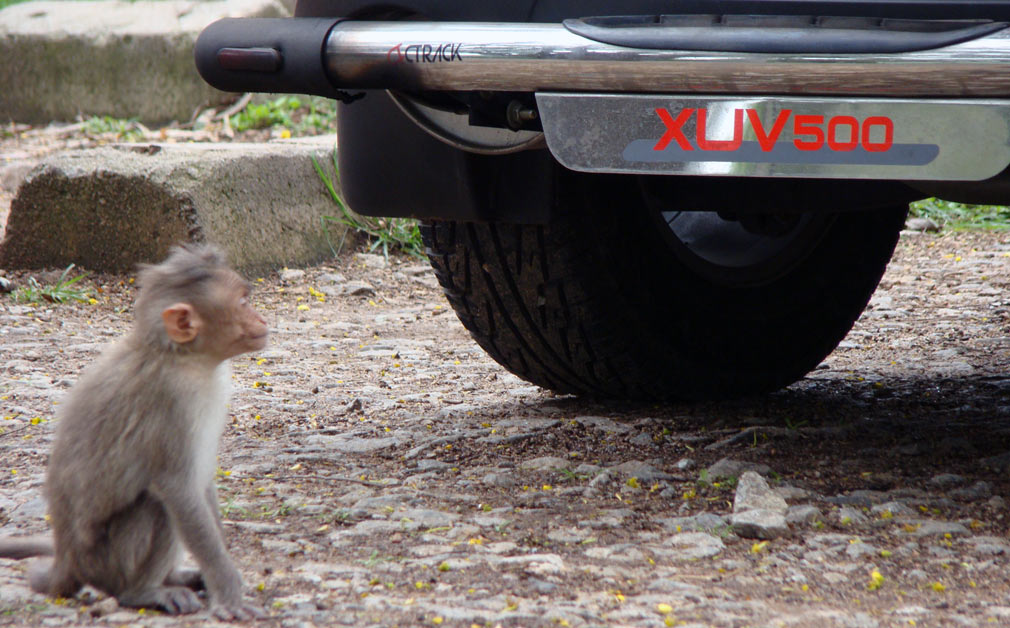 Monkey_XUV_500