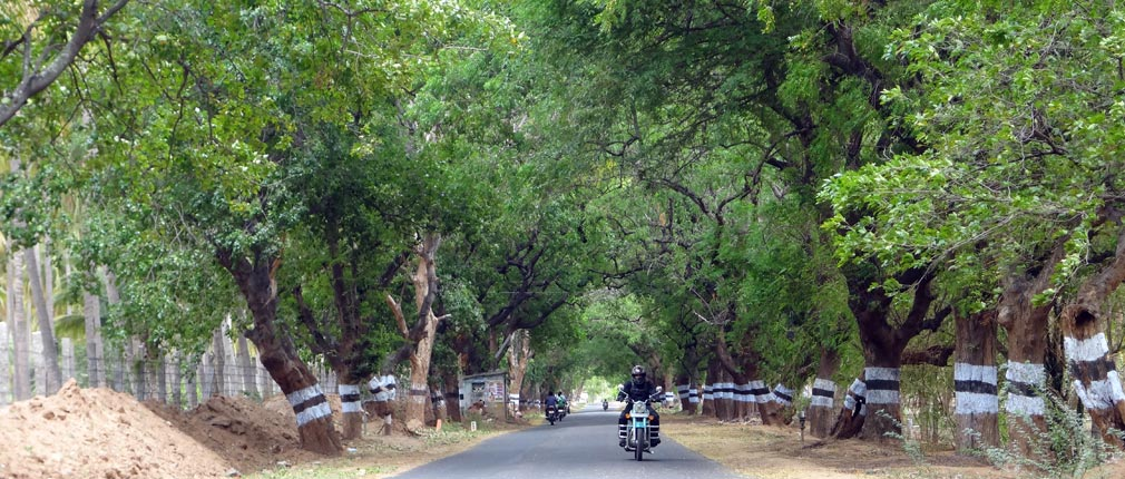 Udumalpet_Munnar_Road