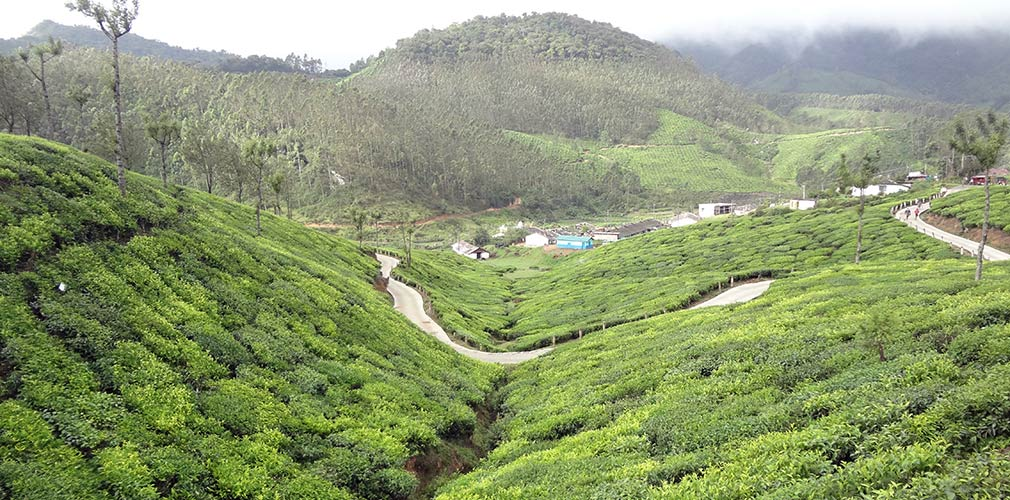 Top_Station_Kundala_Amazing_Tea_Plantations