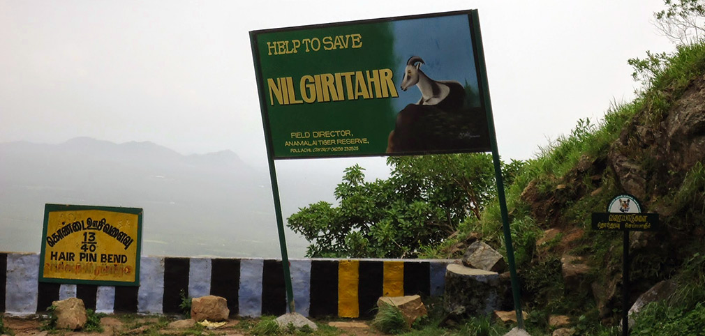 Nilgiri_Tahr_Save_Them