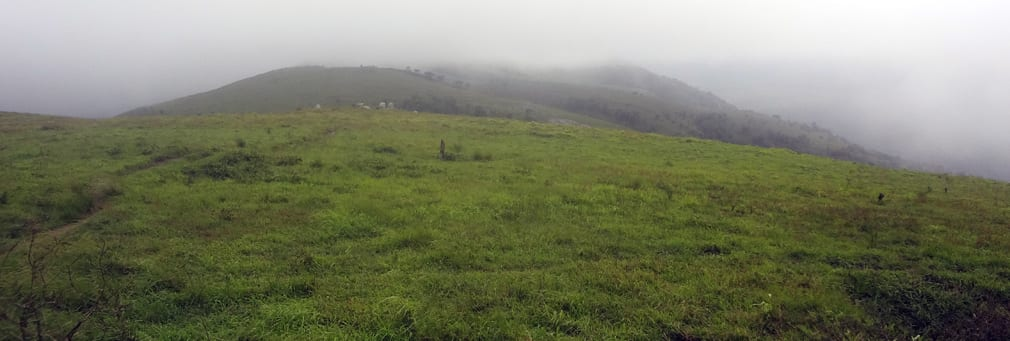 Gopalaswamy_Hills_Meadow