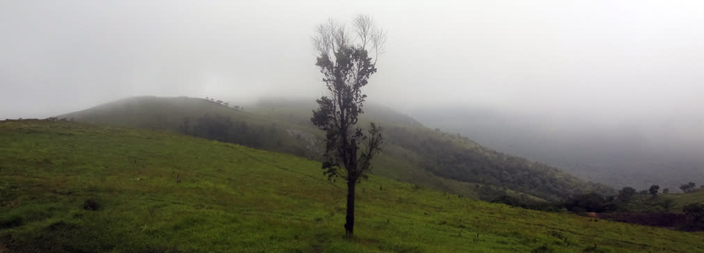 Gopalaswamy_Hills_Meadow_2