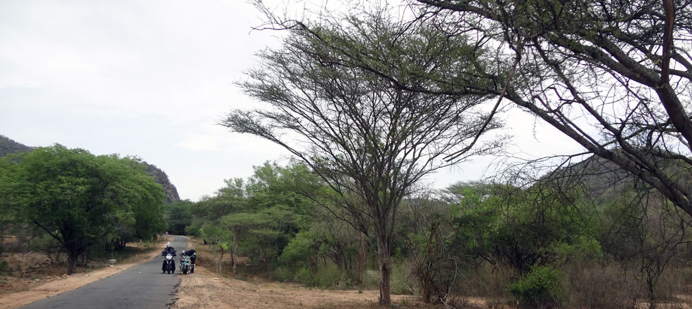 Anamalai_Tiger_Reserve_Halt