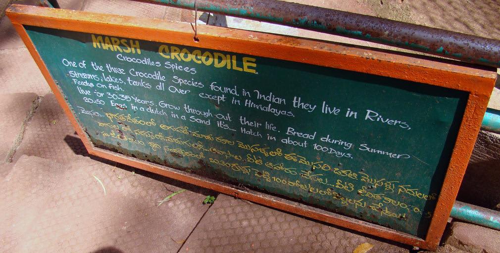 Horsley_Hills_Animal_Complex_Marsh_Crocodile_Board
