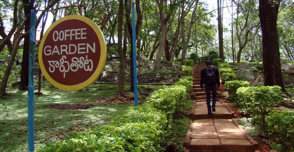 Horsley_Hills_Coffee_Garden