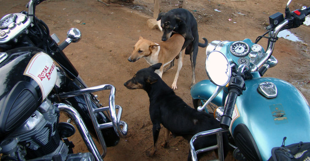 Privacy_Dogs_Threesome