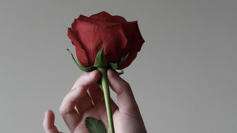 A hand holding a rose by its stem using the thumb and index finger