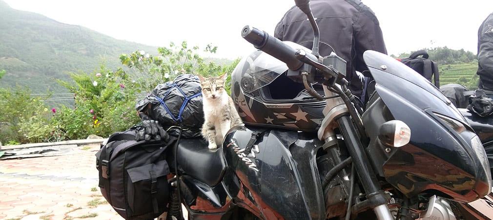 Cat_at_Anand_Resorts