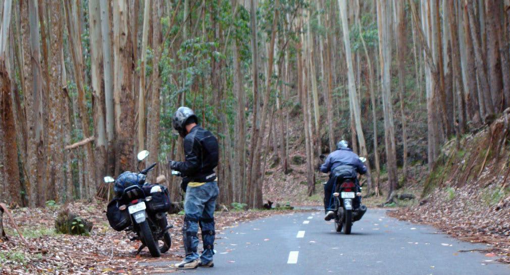 Pampadum_Shola_National_Park